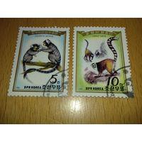 Корея КНДР 1985 Обезьяны полная серия 2 марки