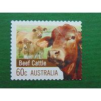 Австралия 2012г. Фауна.