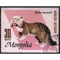 Кошки. Монголия. 1966. Манул (степной кот). Марка из серии. Гаш.