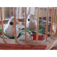 Клетка с птичками музыка ветров