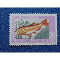 Уругвай 1968г.  Морская фауна.