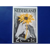 Нидерланды 1980 против наркотиков