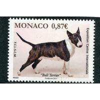 Монако. Международная выставка собак. Бультерьер