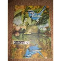 Журнал Юный натуралист 1971 #7