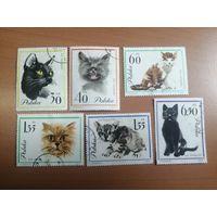 1964 Кошки (Польша) 6 марок