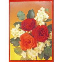 Розы. Чистая. Двойная. 1990 года. Дергилев.