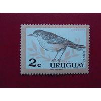 Уругвай. Птицы