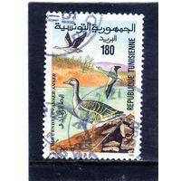 Тунис.  Mi:TN 1303. Грейлаг Гуз (Ансер). Серия: Национальный парк Ичкел. 1994.