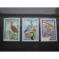 Марки - фауна птицы Сахара