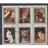 [935] Экваториальная Гвинея 1976. Фауна.Дикие животные. Гашеные марки.