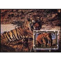 Кошки. Экваториальная Гвинея. 1976. Тигр, слон. Блок, гаш.
