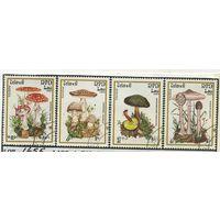 Лаос /грибы/ 1985г-1655