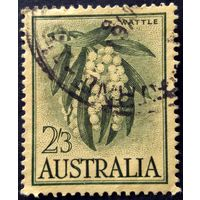 Австралия. Золотая акация. 1959г.