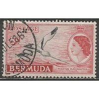 Бермуды. Королева Елизавета II. Птица Фаэтон. 1953г. Mi#139.
