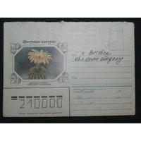 1983 кактус прошло почту