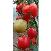 Семена томата Галера