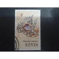 Кения 1971 ракушка