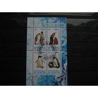 Марки - Бурунди, фауна, пингвины