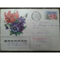 1998 хмк цветы прошло почту