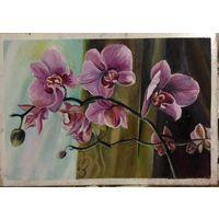 Картина Ветка орхидеи масло