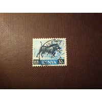 Кения 1966 г.Пустынный бородавочник .