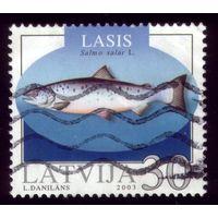 1 марка 2003 год Латвия Рыба 595