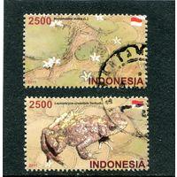 Индонезия. Флора, фауна. Лягушки