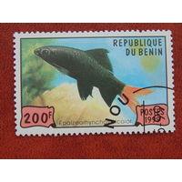 Бенин  1999г. Фауна.