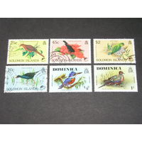 Соломоновы Острова, Доминикана Птицы (2)