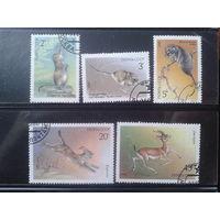 1985 Фауна Полная серия