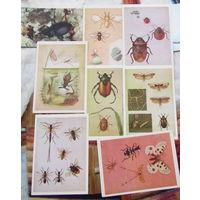 В подарок к купленным открыткам.Открытки Насекомые 1988г