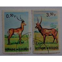 Бурунди.антилопы