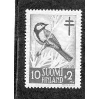 Финляндия. Птицы. Большая синица