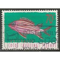 Кокосовы острова. Рыба Белка-Диодема. 1998г. Mi#367.