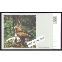 Фауна птицы 3