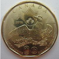 Канада 1 доллар 2016 г. XXXI летние Олимпийские Игры, Рио-Де-Жанейро 2016 (m)