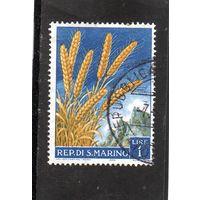 Сан-Марино.Ми-594.Колосья пшеницы.1958.