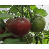 Семена томата Первый помощник