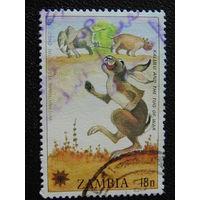 Замбия 1979г. Заяц.