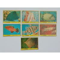 Аджман 1972г. Морская фауна.