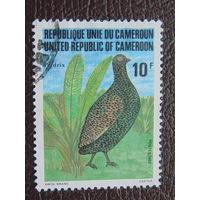 Камерун 1982г. Птицы