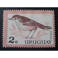 Уругвай 1963 дрозд