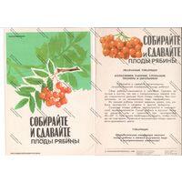 Буклет роскоопторгрекламы - собирайте и сдавайте плоды рябины , 1983 г.