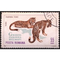Кошки. Румыния. 1964. Тигры. Марка из серии. Гаш.