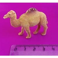 Верблюд. 2.