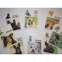 Набор открыток СССР, Наши верные друзья, выпуск 2, декоративные собаки