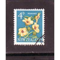 Новая Зеландия.Ми-397. Puarangi, Венецианский маллов (Hibiscus trionum). 1960.