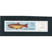 Аргентина. Рыбы. Дорада золотистая