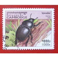 Камбоджа. Жуки. ( 1 марка ) 1998 года.