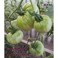 Семена томата Новое Поколение Бурчема